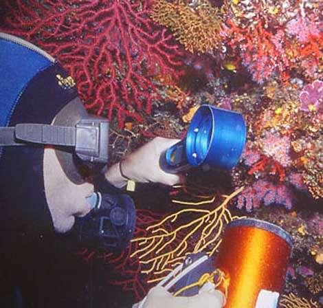Figure 7 : paroi de l'entrée d'une grotte sous-marine chargée d'éponges, de petits coraux scléractiniaires éponges rouge et jaune et corail rouge. Marseille, 20 m. © J.-G. Harmelin, tous droits réservés, reproduction et utilisation interdites