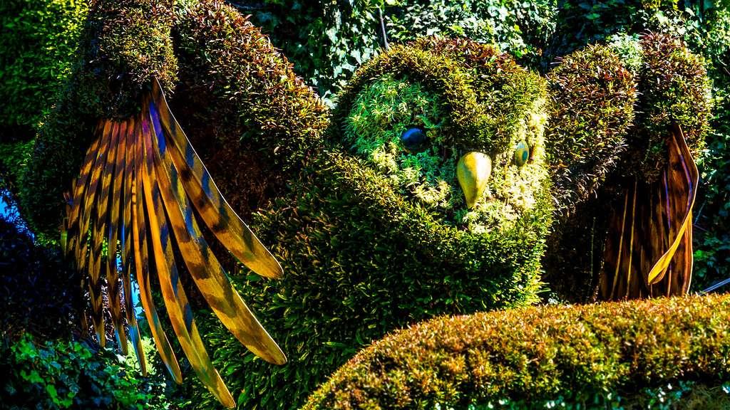 Sculpture végétale de chouette dans l'arbre aux oiseaux