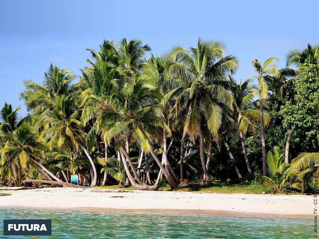 Plage de l'île aux Nattes, proche de Sainte Marie