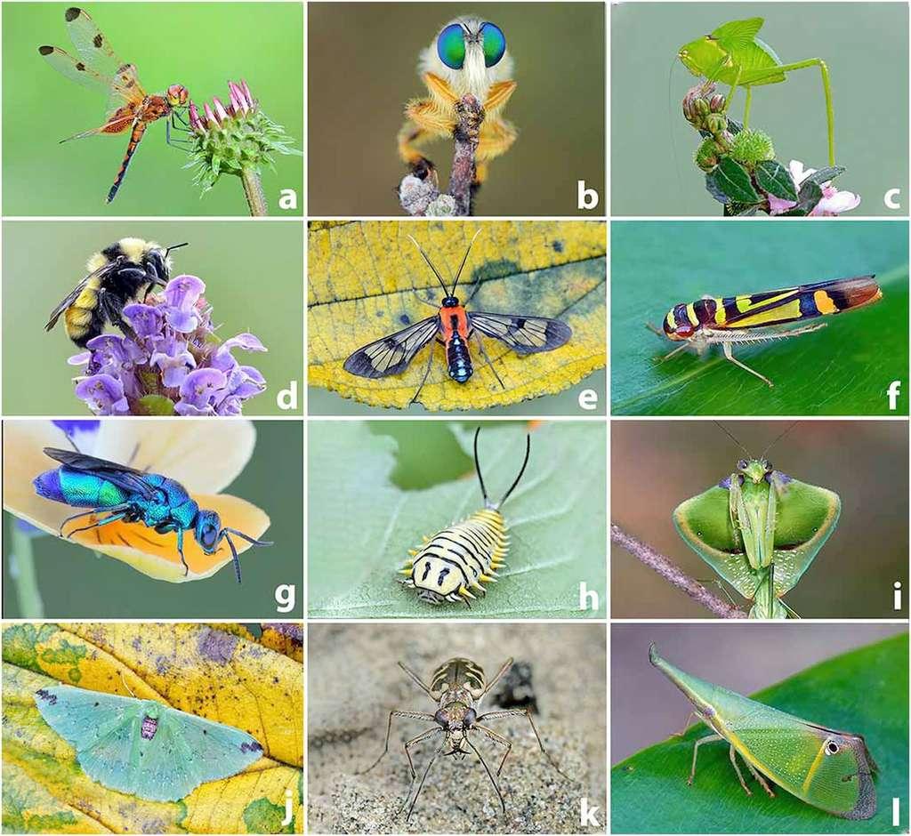 La très grande diversité des insectes rend difficile une évaluation de leur déclin. © Michael Thomas