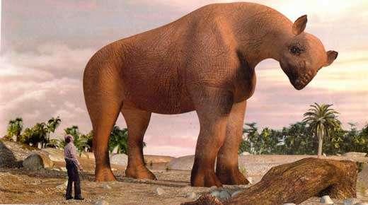Le baluchitère, cousin du rhinocéros, découvert au Balouchistan, est à ce jour le plus grand mammifère terrestre connu. Il devait peser jusqu'à 20 tonnes. © 2001 Ex-Machina