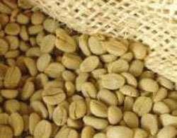 Grains de café vert © FAO