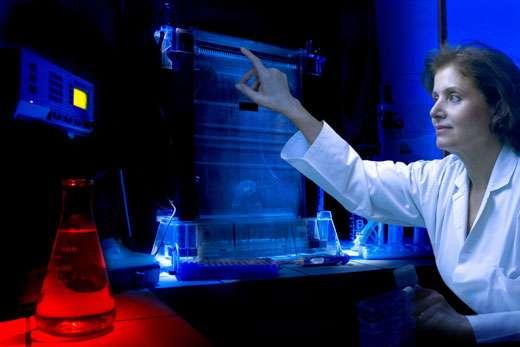 Pr. Habiba Bouhamed Chaabouni, Tunisie, L'ORÉAL -UNESCO Award For Women in Science, 2006 Laureate pour l' Afrique. Pour sa contribution à l'analyse et la prévention des troubles héréditaires. Pr. Habiba Bouhamed Chaabouni dans son laboratoire de l'Université - Ecole Médicale de Tunis © Micheline Pelletier / GAMMA
