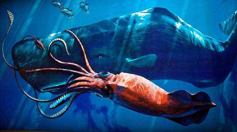 Combat entre un cachalot et un calmar géant, vue d'artiste. © etee, CCA-SA 2.0 Generic license