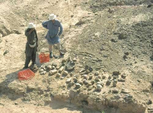 Récolte de restes de baluchithère : le premier tri est opéré par Jean-Loup Welcomme et Pierre-Olivier Antoine. © 1999 MPFB (LM)