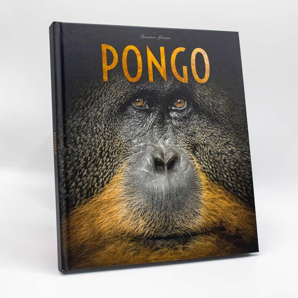 Pongo pour découvrir le monde fascinant de l'ourang-outan. © Maxime Aliaga