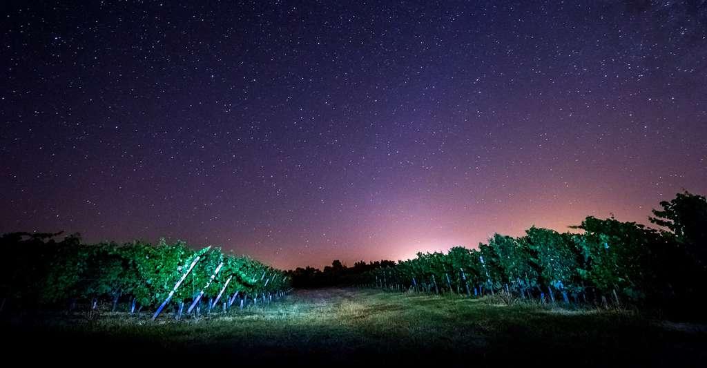La biodynamie tente notamment d'organiser la vie dans les vignes en fonction du cycle de la Lune. © FreeProd, Fotolia