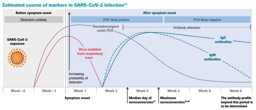Les tests sérologiques mesurent deux types d'anticorps : les IgM et les IgG. Les IgM apparaissent dès le 5e jour, puis sont remplacés au bout de 10 à 15 jours par les IgG. Le dosage de chaque type d'anticorps permet ainsi d'établir la date de contamination. © Roche