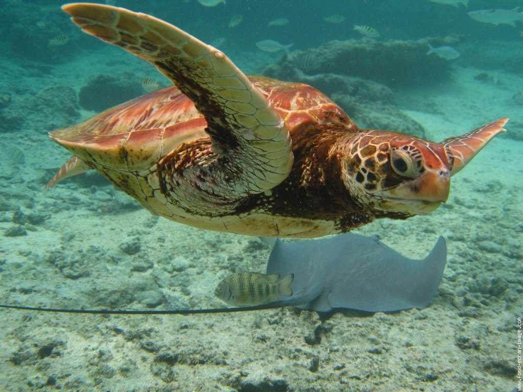 Les tortues sont un groupe qui n'a pas souffert de la crise. © DR