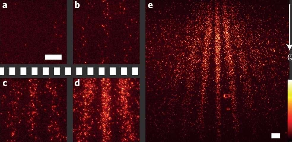 Des extraits du film ci-dessous réalisé avec la technique de microscopie en fluorescence montrant des franges d'interférences produites par un réseau de diffraction. Les franges mesurent environ 0,1 mm d'épaisseur. Ces extraits en temps réel correspondent pour les premières images à 2,20 minutes puis 40 (d) et enfin 90 (e). © Juffmann et al.