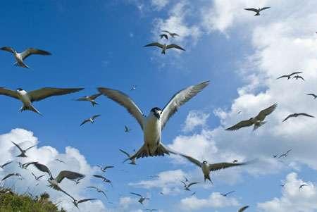 265 espèces d'oiseaux vivent à Madagascar. De nombreux oiseaux marins migrateurs installent leus nids sur les ilôts et les côtes au moment de la reproduction. © Alexis Rosenfeld Reproduction interdite