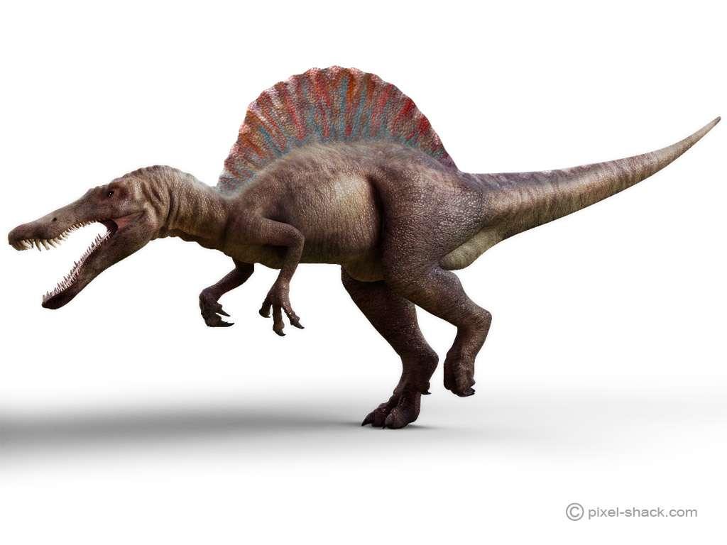 Le spinosaure, ou Spinosaurus, un dinosaure de taille
