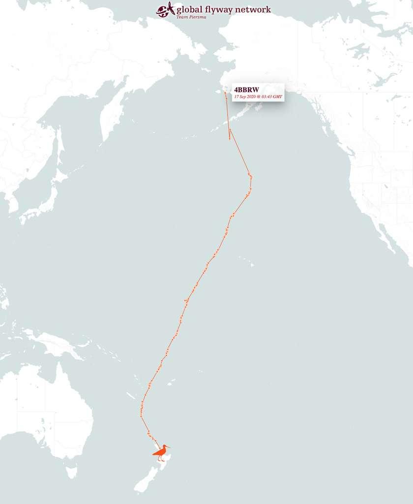 Les 12.200 kilomètres parcourus par la barge rousse sans escale, entre l'Alaska et la Nouvelle-Zélande. © Global Flyway Network