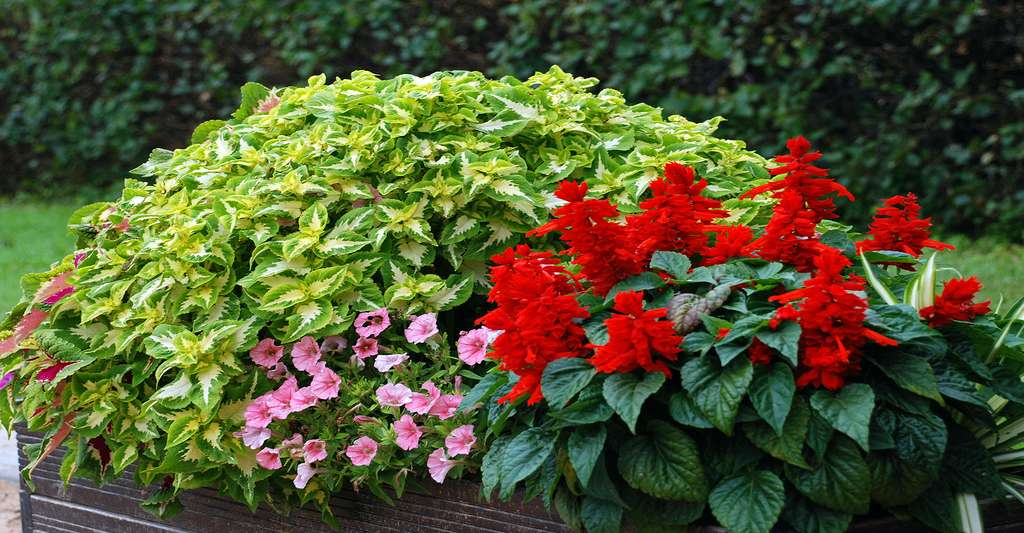 Une jardinière d'automne. © Krosbona, Shutterstock