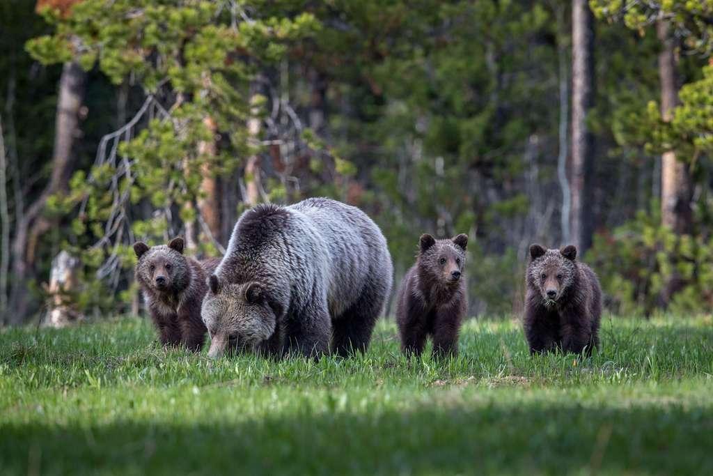 Trois charmants oursons dans les jupes de maman