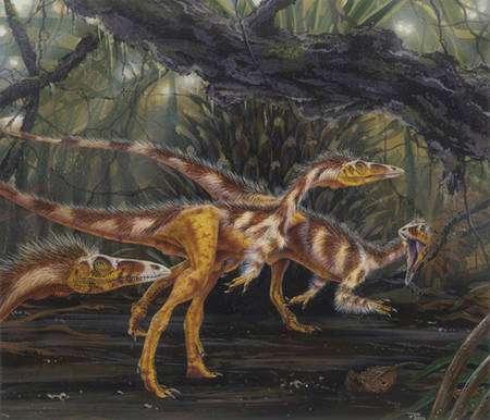 Des Compsognathus (Crédit : www.marshalls-art.com).