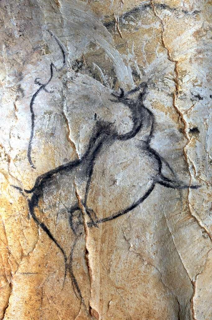 Dessin pariétal de cerf mégacéros