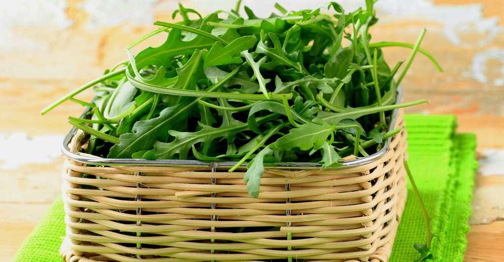 La roquette est une salade au goût de noisette. © Dream79, Shutterstock