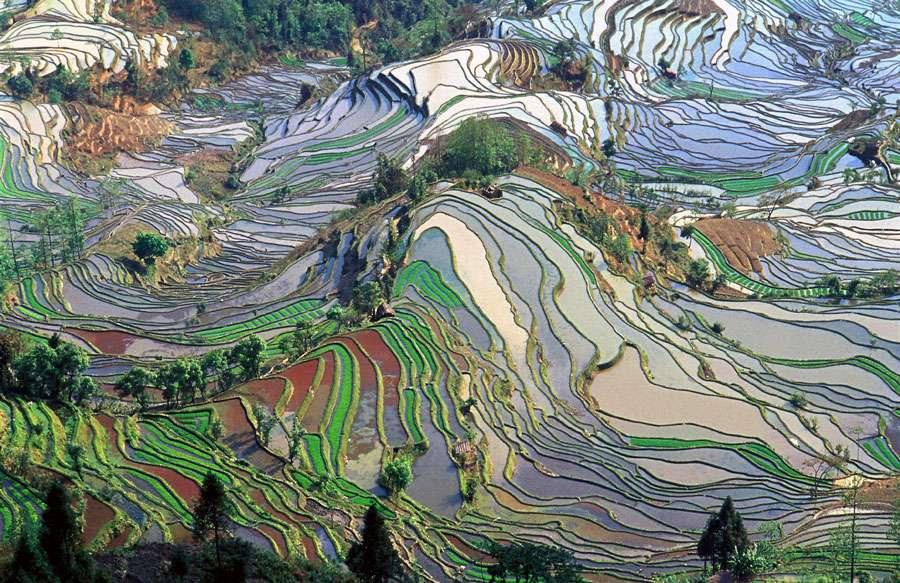 Rizières en terrasse dans le Yunnan