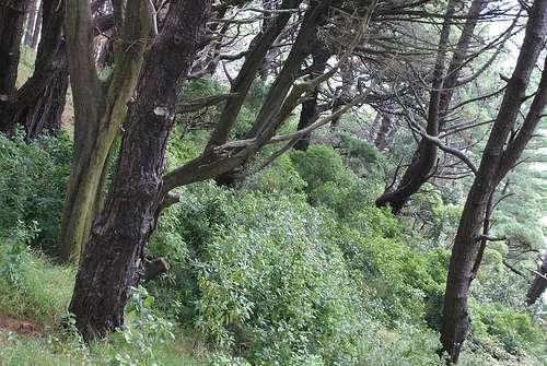La forêt du Seigneur des Anneaux, située au mont Victoria Wellington, en Nouvelle Zélande. © Airflore/Flickr, Licence Creative Common (by-nc-sa 2.0)
