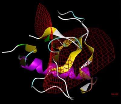 Ribonucléase