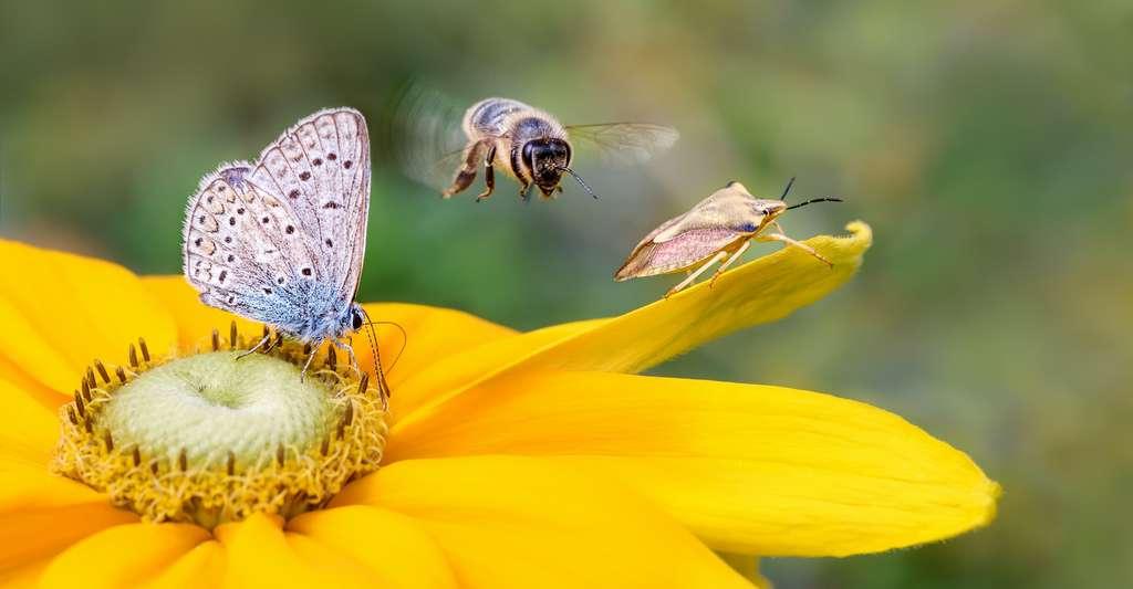 Pour participer à la protection de la biodiversité, envisagez peut-être de transformer au moins une partie de votre jardin en prairie fleurie. © kathomenden, Adobe Stock