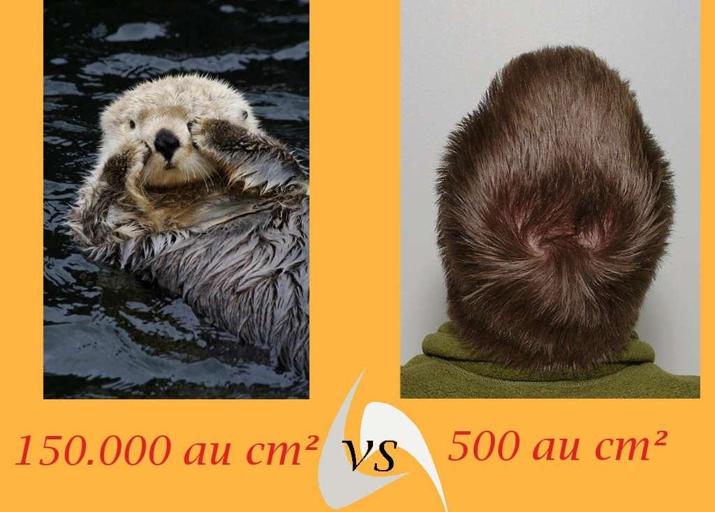 Une petite comparaison entre l'Homme et le reste du règne animal nous amène à nous considérer avec un peu plus d'humilité. Cliquez pour accéder aux images. © Futura-Sciences