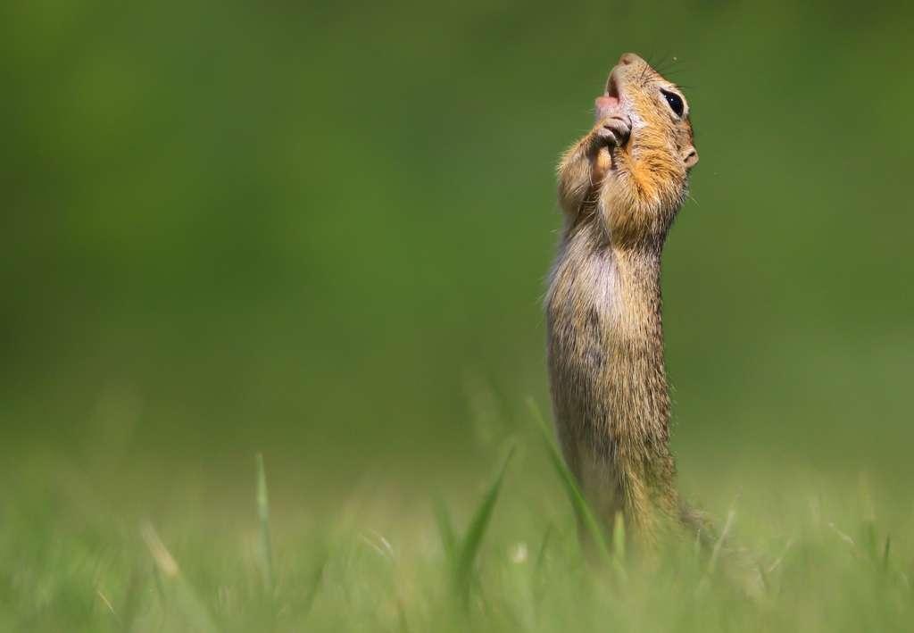 « O Sole Mio. » © Roland Kranitz, Comedy Wildlife Photography Awards 2020