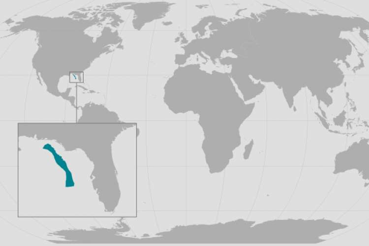 La population de rorquals de Bryde du golfe du Mexique vit dans une zone géographique très restreinte. Les scientifiques pensent qu'il s'agit d'une espèce à part entière qu'ils ont appelée baleine de Rice. © NOAA