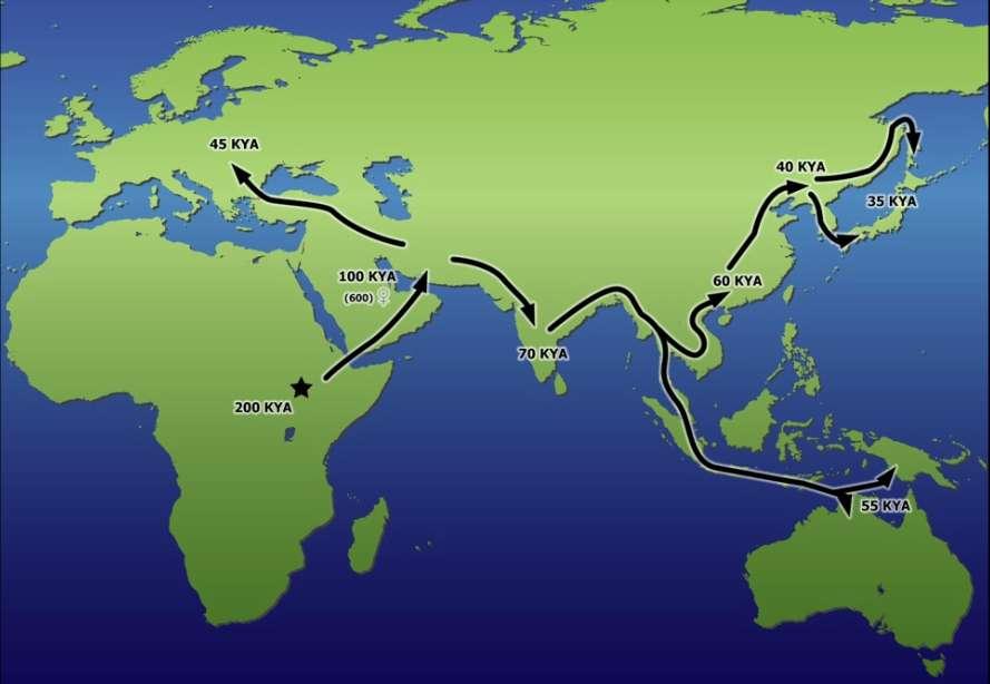 Résumé des migrations réalisées par les premiers Hommes modernes à partir de l'Afrique et en direction de l'Europe et de l'Asie. Le timing approximatif est exprimé en dizaine de milliers d'années (KYA). © A. Nichols et University of Illinois