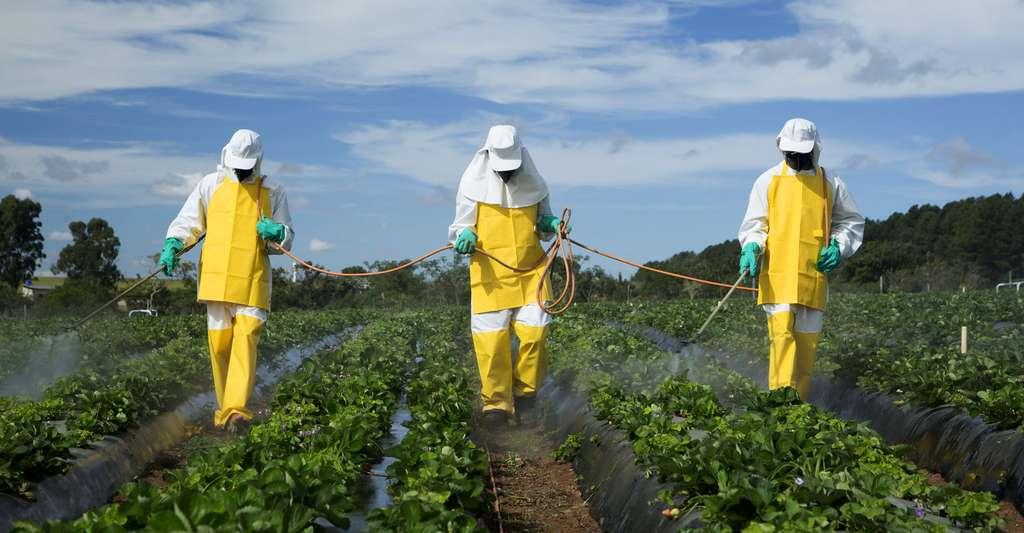 Épandage de pesticides. © Adriano Kirihara - Shutterstock