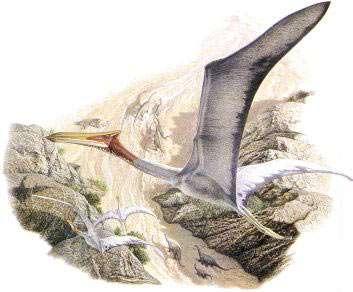 Le ptérosaure Quetzalcoatlus, le plus gros animal qui ait jamais volé. © Natural History Museum, John Sibbick