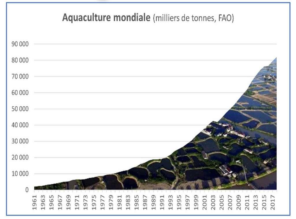 Graphique réalisé par l'auteur à partir de chiffres de la FAO. © Bruno Parmentier, tous droits réservés