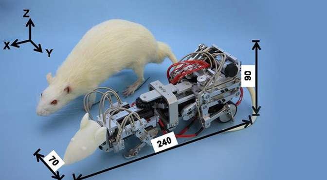 Le robot rat. © Extreme Tech, DR