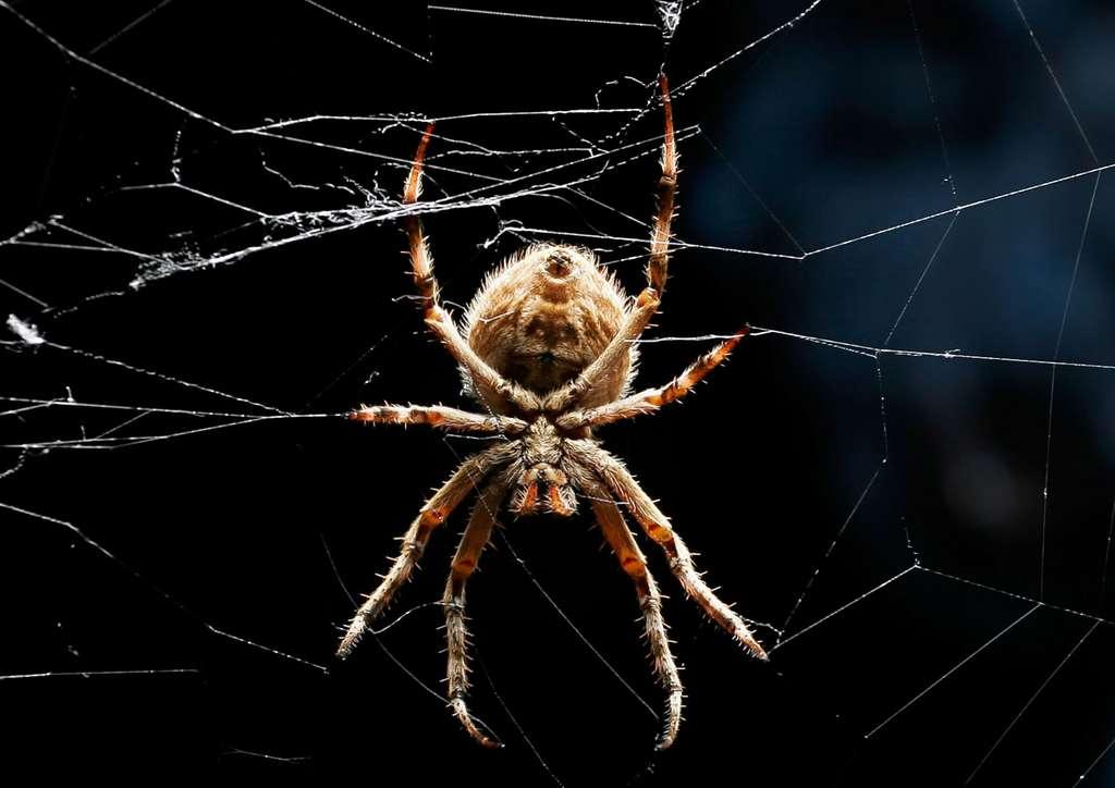 La soie super-résistante des araignées