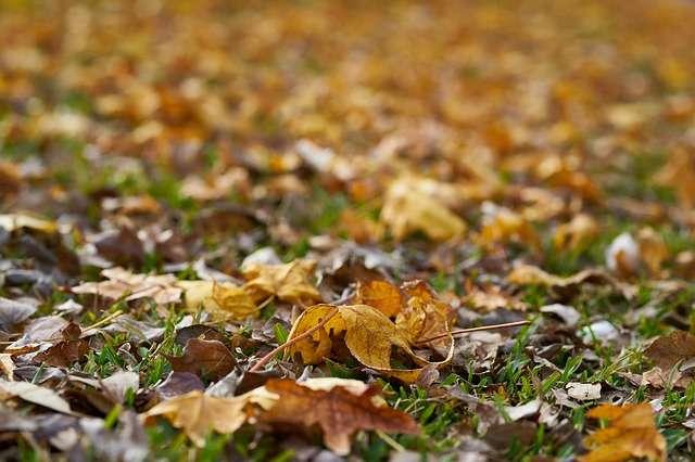 Toutes les feuilles mortes sont-elles bonnes pour le compost ? © Engin Akyurt, Pixabay, DP
