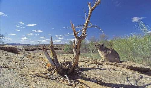 Ambiance de Namibie. © Christian König - Reproduction et utilisation interdites