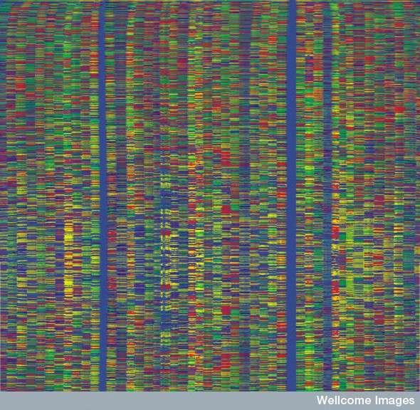 Le séquençage de l'ADN d'un neurone est un processus fastidieux. Il a fallu un an aux auteurs pour tester leur technique et la valider. © The Sanger Institute, Wellcome Images, Flickr, cc by nc nd 2.0