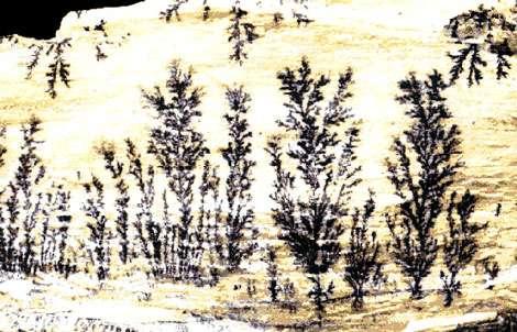 Dendrites de manganèse sur calcaire