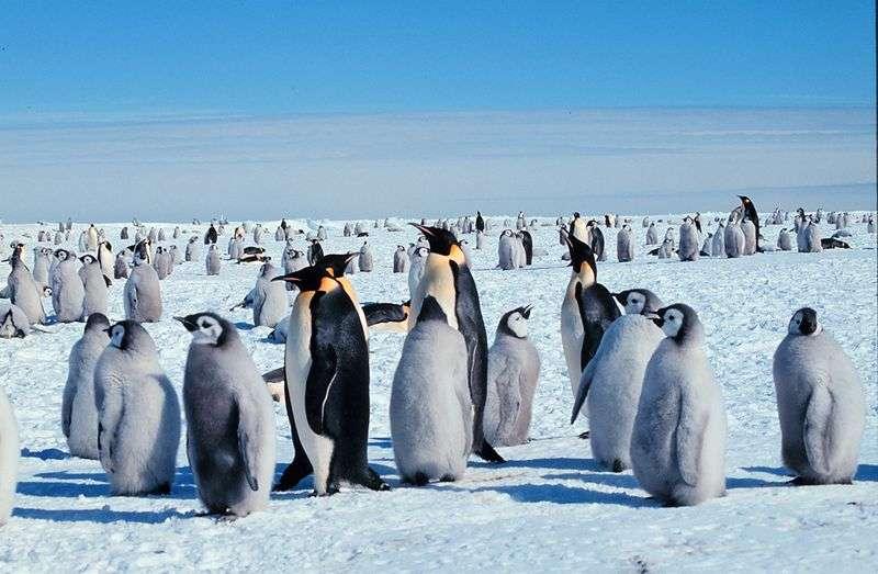 Groupe d'adultes et de jeunes. © Guiseppe Zibordi, NOAA, domaine public