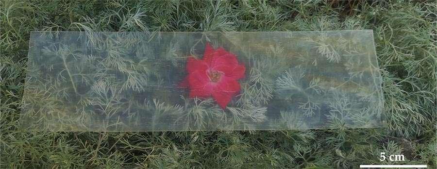 Sur cette photo, on voit très bien l'herbe et la fleur au travers d'un morceau de bois transparent produit par les chercheurs de l'université du Maryland (États-Unis). © Qinqin Xia, Université du Maryland