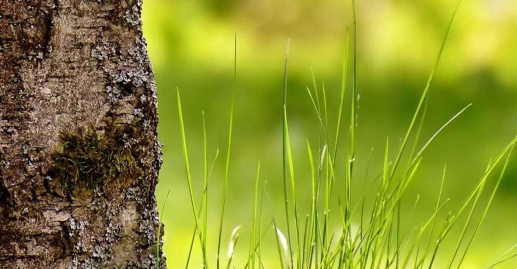 Qu'est-ce qu'une terre bio ? © Alexas Fotos, Pixabay, DP
