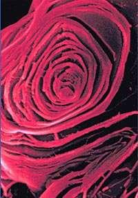 L'acide borique au microscope (Crédit : Argonne National Laboratory).