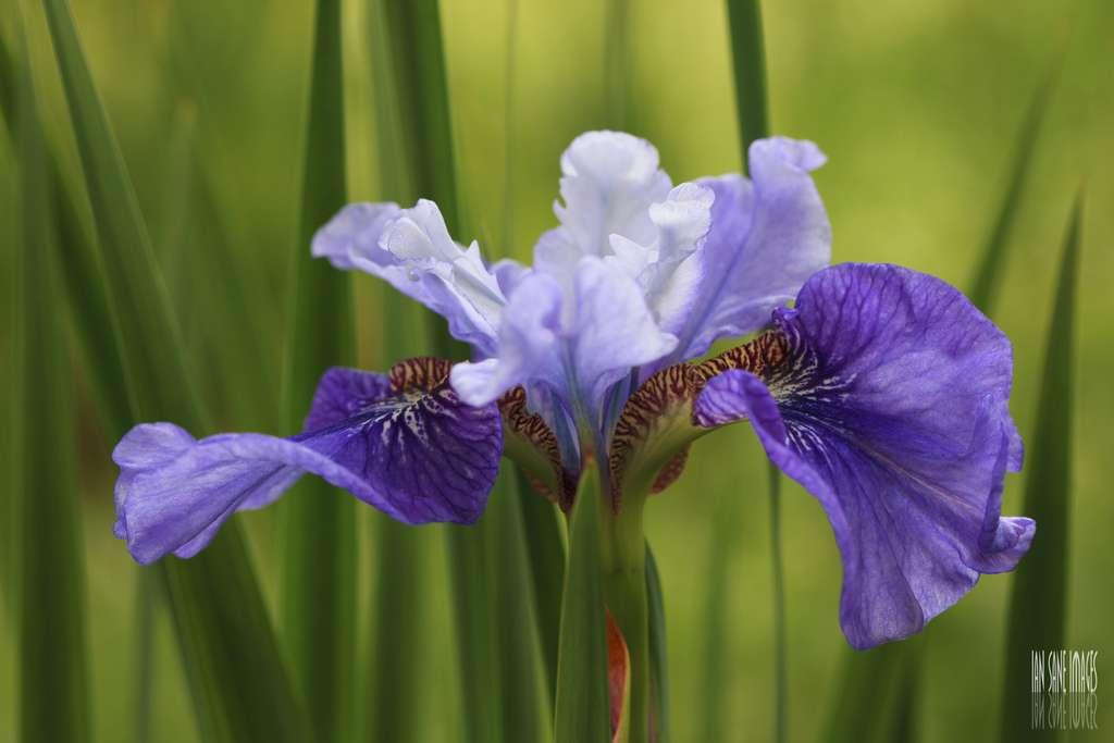 Si vous choisissez des orchidées pour votre jardin, veillez à vous fournir chez un spécialiste de ces plantes. © Ian Sane, Flickr, CC by-nc-sa 2.0