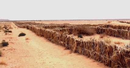 Palmeraie de Ben Aït Omar, Maroc. Bande de carroyage de protection en palmes tressées. Cette bande longue d'un kilomètre est destinée à piéger le sable à l'amont vent de la palmeraie. Cette fixation mécanique doit être accompagnée d'une fixation biologique des sables ainsi piégés.