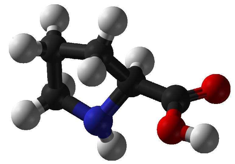 La proline, ici représentée en 3D, est l'un des 20 acides aminés qu'utilise la vie terrestre comme briques des protéines. Ainsi, lorsque la prolyl-ARNt synthétase, l'enzyme qui l'intègre aux protéines en formation, est inhibée, c'est toute la synthèse protéique qui est affectée. © Benja bmm27, Wikipédia, DP
