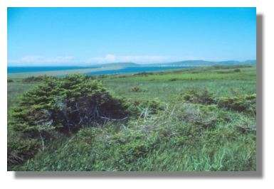 Paysage au sud du village de Miquelon © Francis Muller