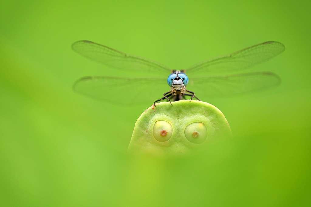 « Les yeux bleus, les yeux verts », Lac de l'Est, Wuhan, Chine. © Minghui Yuan