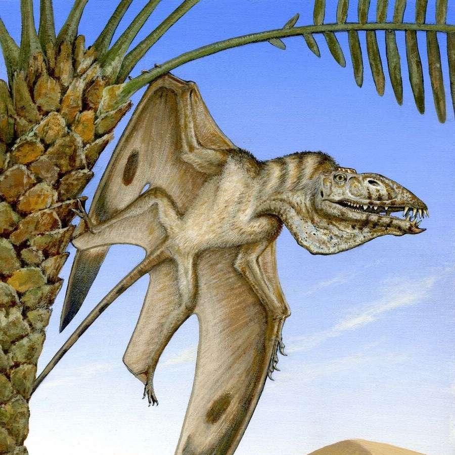 Représentation de Caelestiventus hanseni, un ptérosaure du Trias, d'une envergure d'environ 1,50 mètre. © Brooks B. Britt et al., BYU Photo et Michael Skrepnick (dessin)