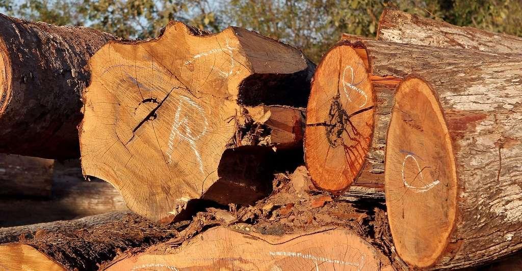 La déforestation cause la perte des grands habitats dont les signes ont besoin. © Ibama, Wikimedia commons, CC by 2.0